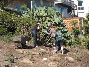 Attacking yucca jade and cactus