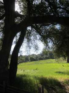 Beautiful meadow at Trippett Ranch
