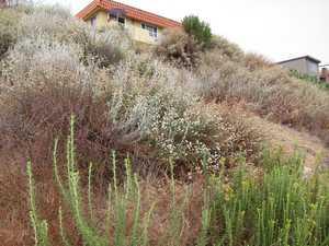 Restkred hillside