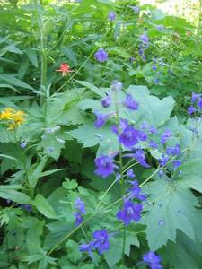 Highlight for Album: Flora and Fauna