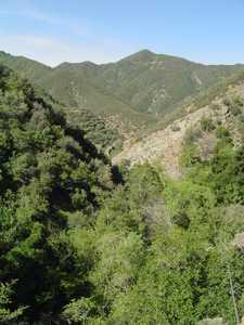 Manzana 2004 - Los Padres scenery