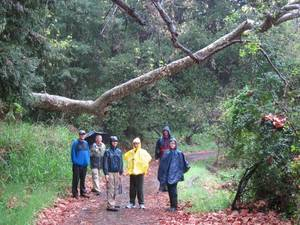 Highlight for Album: March 2011 - Santa Monica Mountains - A Rainy Day