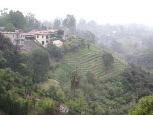 Vineyard in Palisades