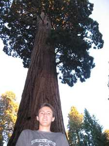Murray with a giant Sequoia towering over his head