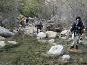 Highlight for Album: Matilija Creek March 2006