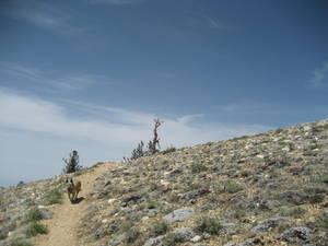 Highlight for Album: Mt Abel to Mt Pinos May 2007