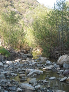Lower Topanga Creek, future home to Southern Steelhead Trout and picnic paradise